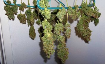 Marijuana possession charges